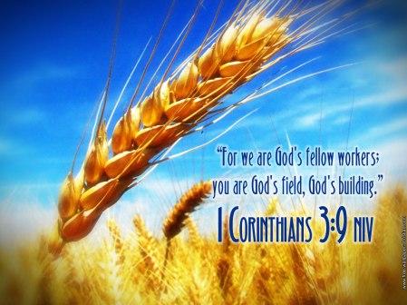 Co-laborers - 1 Corinthians-3 9