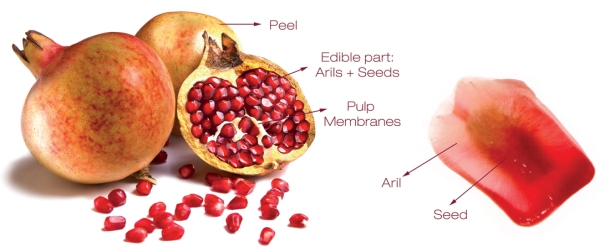 pomegranate_parts_granatum_08
