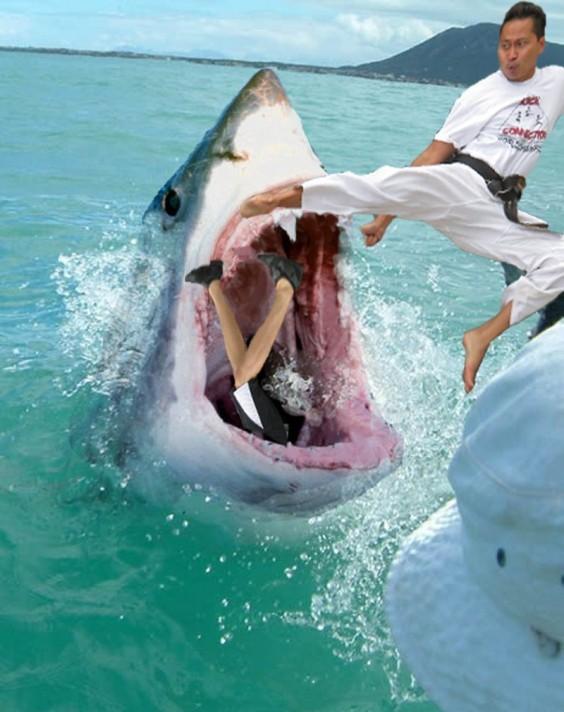 karate-kicking-a-shark-92435