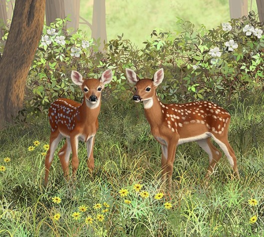 Crista Forest - Twin Fawns.jpg
