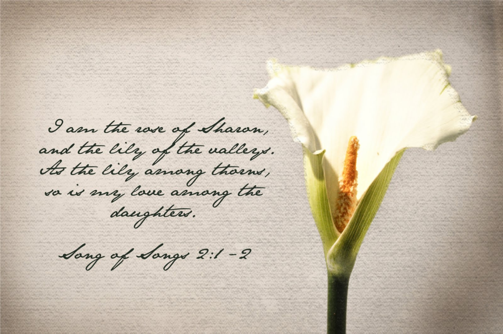 Song 2 Rose of Sharon Lily of Valley.jpg
