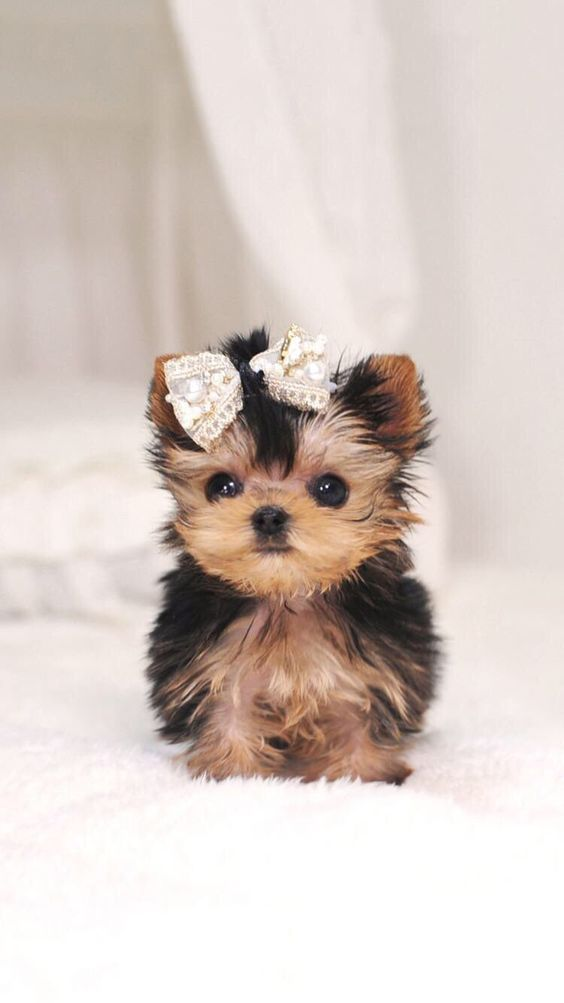 Cute puppy with ribbon